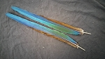 Harlequin Macaw Parrot Tail Feathers