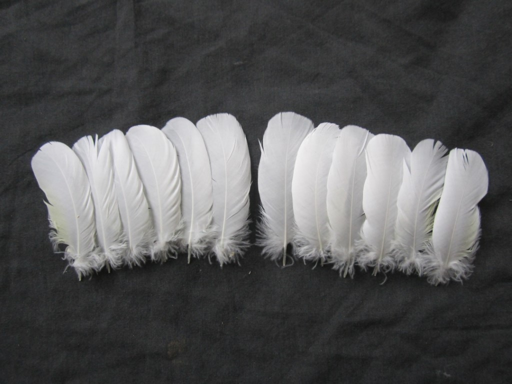Cockatoo Feathers