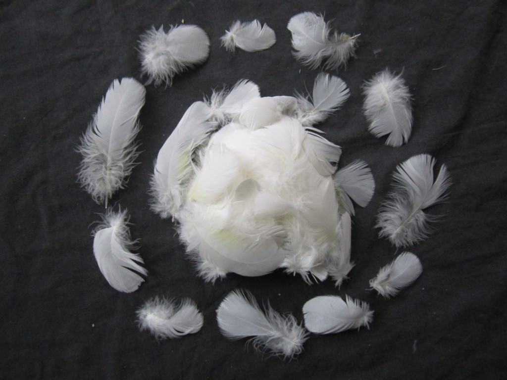 100 Cockatoo Feathers | White Parrot