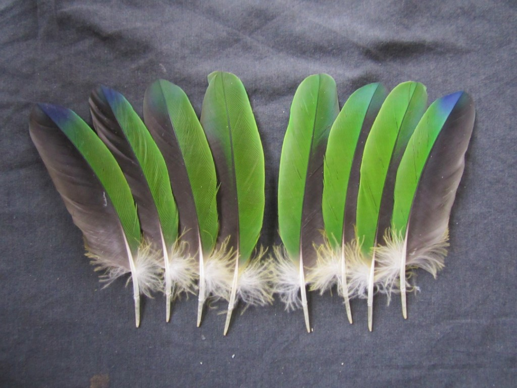 Amazon Parrot Feathers