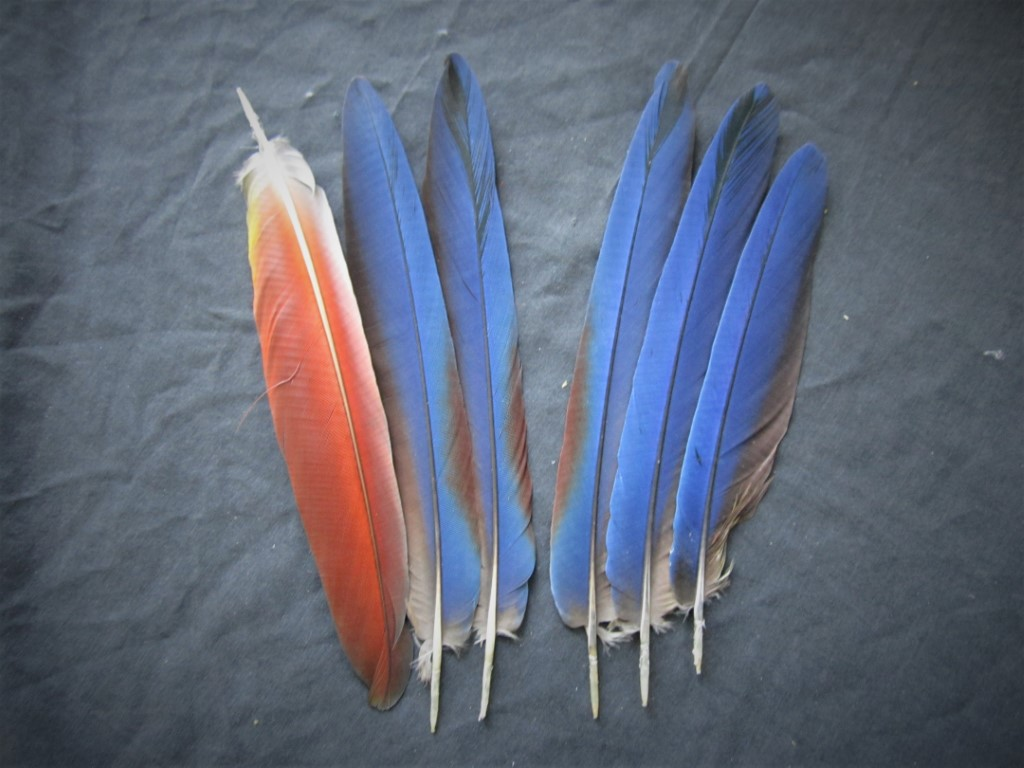 Green Wing Macaw Parrot Wing Feathers