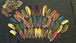 Flat Covert Macaw Parrot Feathers