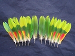 Damaged Parrot Tail Feathers