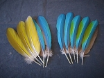 Catalina Macaw Parrot Feathers