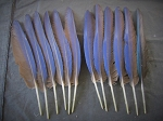 12 Hyacinth Macaw Wing Feathers