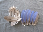 Hyacinth Macaw Parrot Feathers