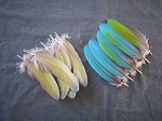 Harlequin Macaw Parrot Wing Feathers