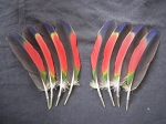 Amazon Parrot Wing Feathers