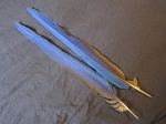 2 Blue & Gold Macaw Parrot Tail Feathers