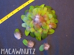 50 Camelot Macaw Parrot Feathers